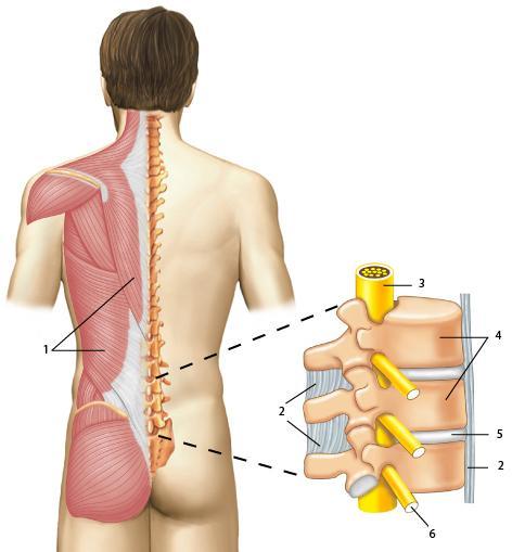 Болит слева с низу спины у