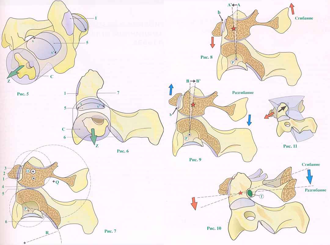 Атланто-аксиального сустава как делают рентген тазобедренных суставов собаке