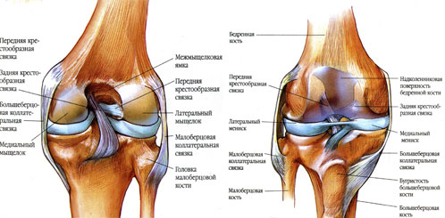 средство от артроза коленного сустава