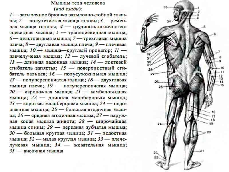 Вспомогательные элементы сустава что к ним относятся анатомия бубновский см лечение голеностопного сустава