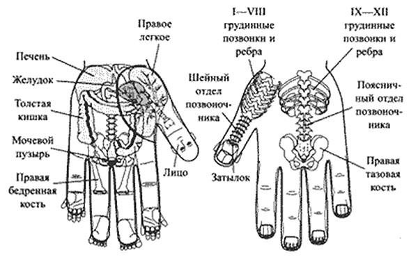 Су джок терапия лечение суставов стоимость протезирования сустава тазобедренного