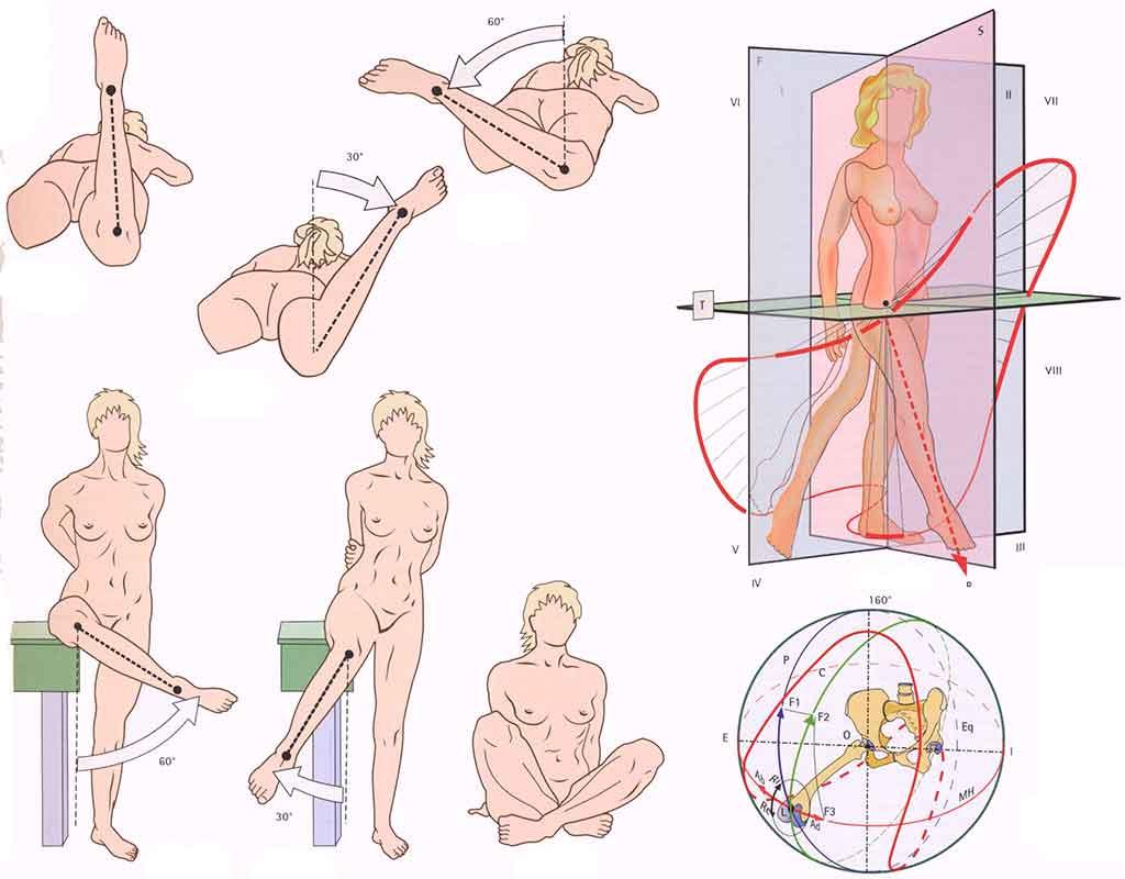 как развить подвижность в тазобедренном суставе